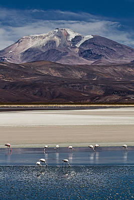 Photograph - Flamingos In The Shadow Of A Chilean Volcano by Ron Dubin