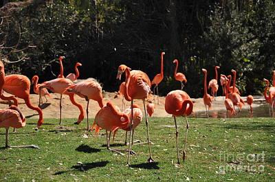 Art Print featuring the photograph Flamingos by John Black