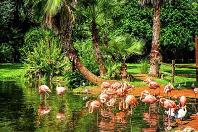 Photograph - Flamingos by Louis Ferreira