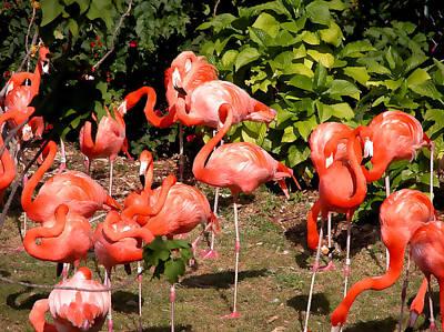 Mixed Media - Flamingos Mingling by Bibi Rojas