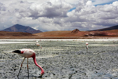 Photograph - Flamingos On Uyuni Salt Flats by Aidan Moran