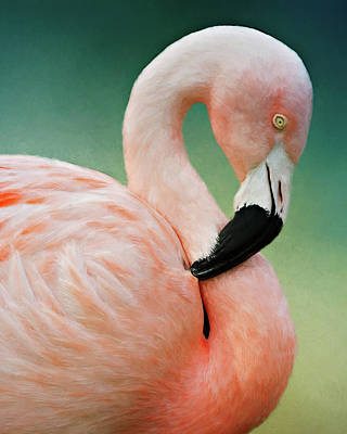 Photograph - Flamingo's Portrait by Lana Trussell