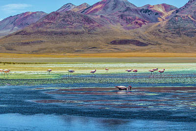 Photograph - Flamingos, Salar Uyuni, Bolivia by Venetia Featherstone-Witty
