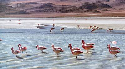 Photograph - Flamingos by Sandy Taylor