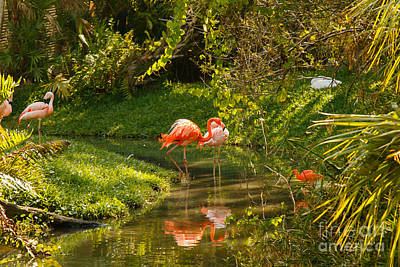 Red Roses - Flamingos Wading by Les Greenwood