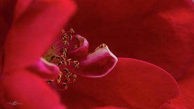 Rosaceae Photograph - Flammentanz by Torbjorn Swenelius