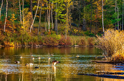 Canadian Marsh Photograph - Flapping For Fall by Steve Harrington