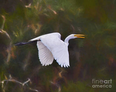 Painting - Flaps Down - Egret In Flight by Kerri Farley