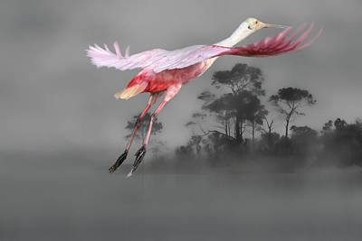 Spoonbill Wall Art - Photograph - Flash Of Pink by Donna Kennedy