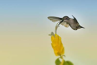 Photograph - Flashing Dip by Carol Eade