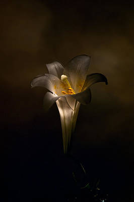 Photograph - Flashlight Series Easter Lily 5 by Lou  Novick