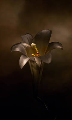 Photograph - Flashlight Series Easter Lily 6 by Lou  Novick