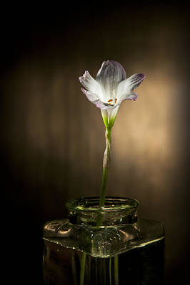 Photograph - Flashlight Series White Flower 1 by Lou  Novick