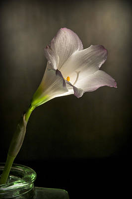 Photograph - Flashlight Series White Flower 5 by Lou  Novick