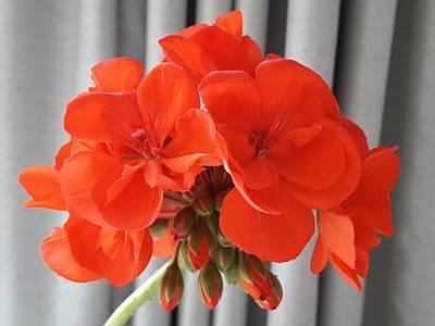 Photograph - Flashy Orange by Nancy Pauling
