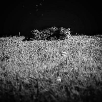Pets Wall Art - Photograph - Flat Cat by Rafa Rivas