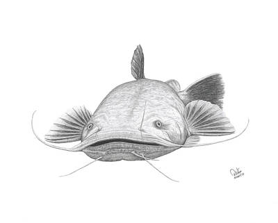 Catfish Drawing - Flathead Catfish by David W Gillum