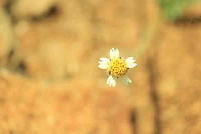 Flower Original by Black Eyes