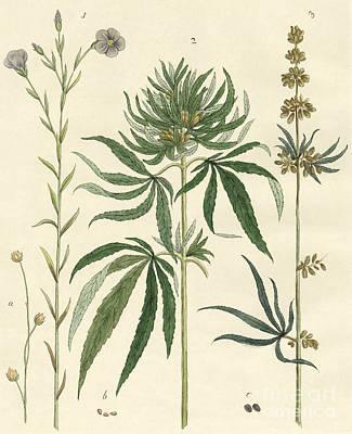 Flax And Hemp Art Print
