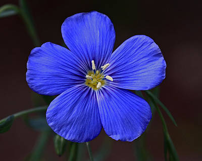 Photograph - Flax by Gary Wing