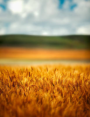 Photograph - Flaxen Layers by Todd Klassy