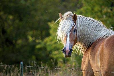 Photograph - Flaxen Mane by Penny Meyers