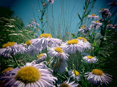 Fort Missoula Photograph - Fleabane by Leah Grunzke