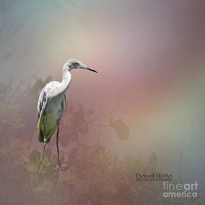 Ibis Photograph - Fledgling Egret By Darrell Hutto by J Darrell Hutto