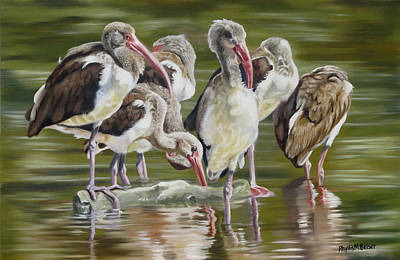 Waterfowl Painting - Fledgling Ibis Study by Phyllis Beiser
