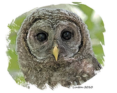 Fledgling Owl Art Print by Larry Linton