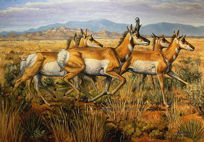 Kerry Nelson Painting - Fleet Pronghorns by Kerry Nelson
