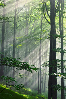 Forest Photograph - Fleeting Beams by Evgeni Dinev