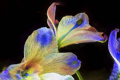 Photograph - Fleeting Flowers by Maria Coulson