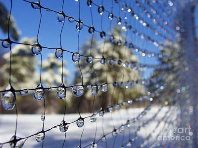 Photograph - Fleeting Moment Iced Net by Mike Bruckman
