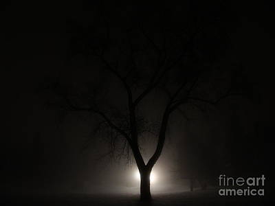 Photograph - Fleeting Moment The Tree Fog by Mike Bruckman