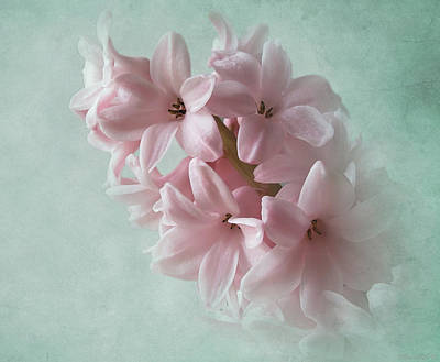 Photograph - Fleeting Spring Pink by Deborah Smith