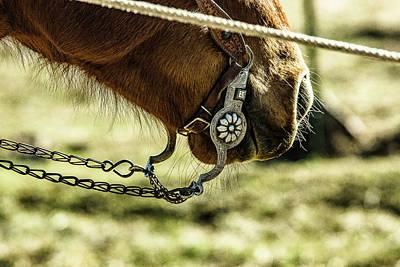 Working Cowboy Photograph - Flemming Bit by Twna Douglas