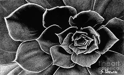 Drawing - Fleur Blanc Succulent by Sheryl Unwin