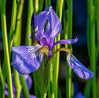 Fleur De Lis Photograph - Fleur-de-lis by Steve Harrington