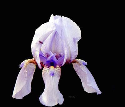 Photograph - Fleur De Lis by Wild Thing