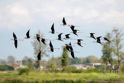 Photograph - Flick Of Birds by Pietro Ebner