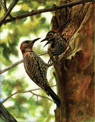 Drawing - Flicker Mother And Son by Susan Donley