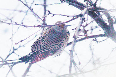 Photograph - Flicker On Branch by Donna Munro