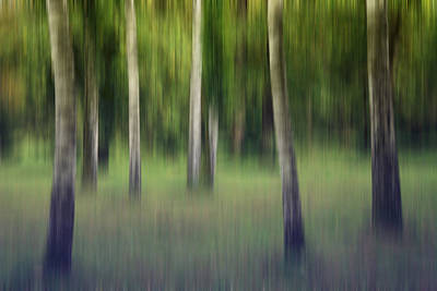 Susann Serfezi Wall Art - Photograph - Flickering Birches by AugenWerk Susann Serfezi