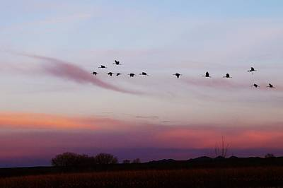 Photograph - Flight At Dusk At The Bosque by Joseph Frank Baraba