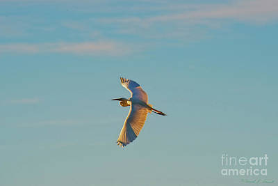 Photograph - Flight At Dusk by David Arment