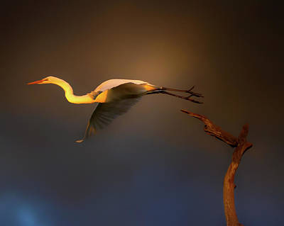Photograph - Flight At Sunset by Mark Andrew Thomas