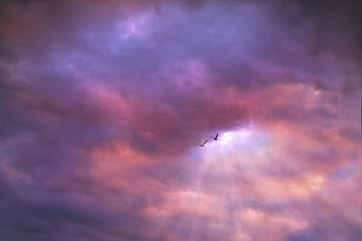 Photograph - Flight Before Sunset by Lilia D