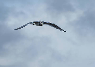 Photograph - Jonathan Livingston Seagull by Marilyn Wilson