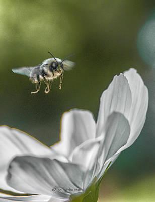 Photograph - flight II.... by Paul Vitko